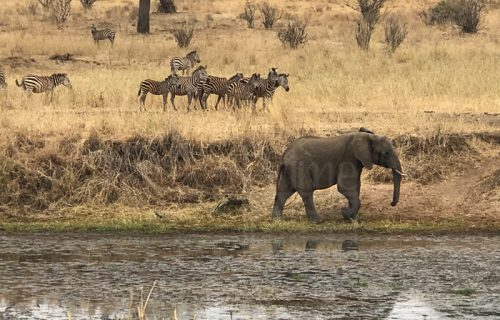 5 Days Tanzania Safari to Lake Manyara, Serengeti & Ngorongoro