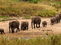 5 Days Wildlife safari in Tanzania