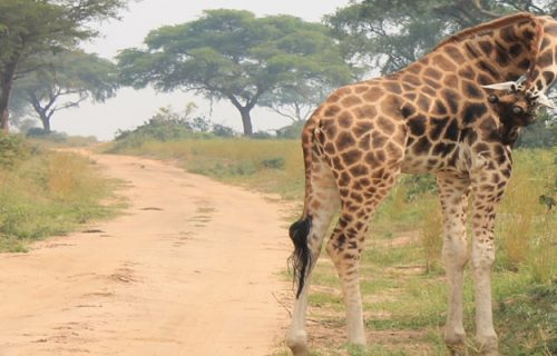 6 Days Uganda Kenya Wildlife & Adventure Safari