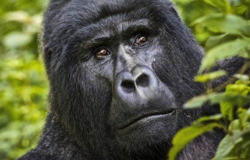 7 Days Culture Safari in Uganda with Gorilla trekking