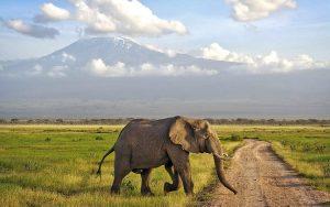 Amboseli Kenya Safari