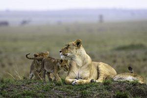 Big Cats and Small Creatures of Masai Mara