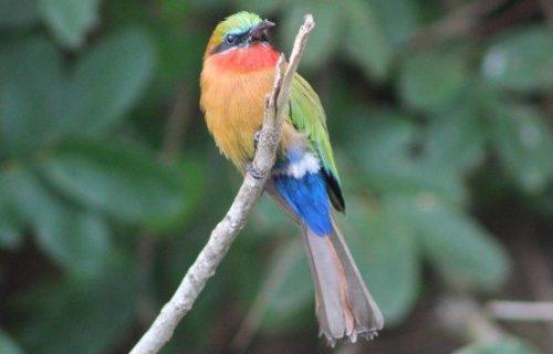 Birds at Murchison Falls National Park