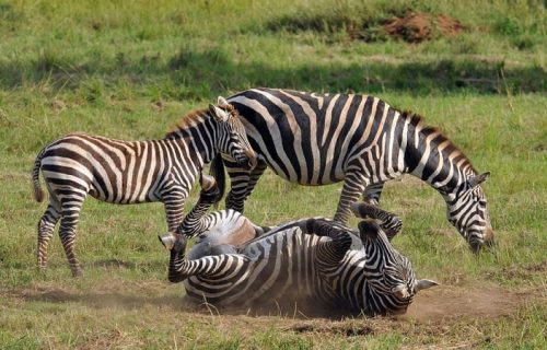 Kidepo Valley National Park wildlife