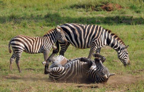 Kidepo Valley National Park wildlife