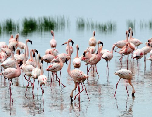 Kenya's top list birding safari destinations – Kenya safari News