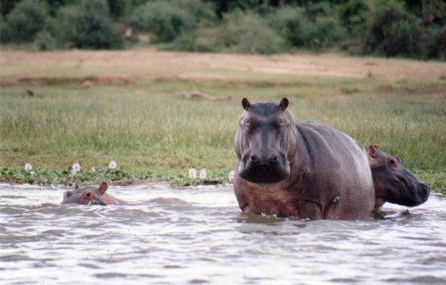 Murchison Falls National Park Uganda safari Tour 3 days