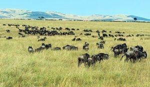 Open Plains of Serengeti National Park
