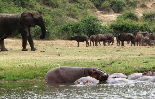 Queen Elizabeth National Park Wildlife Safari in Uganda 3 days