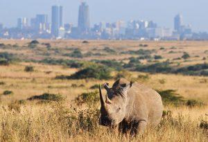 Rhino Nairobi