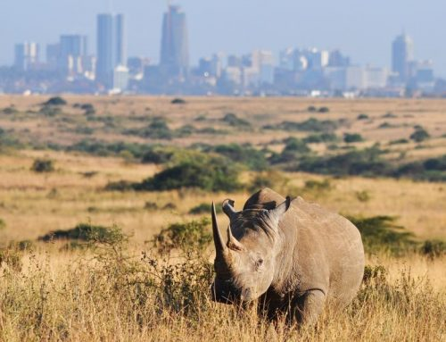 Take a Kenya wildlife safari to Nairobi national park