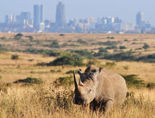 Take a Kenya wildlife safari to Nairobi national park