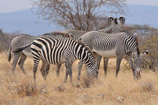 9 Days Kenya Wildlife Safari Tour to Safari Destinations - Kenya
