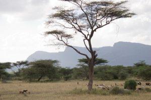 Shaba National Reserve.
