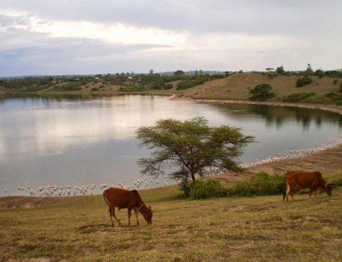 A Kenya Wildlife Safari to Lake Nakuru National Park