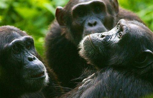 Uganda & Rwanda Safari 13 days
