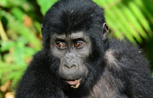 Wildlife & Primates trekking Uganda Safari 9 days