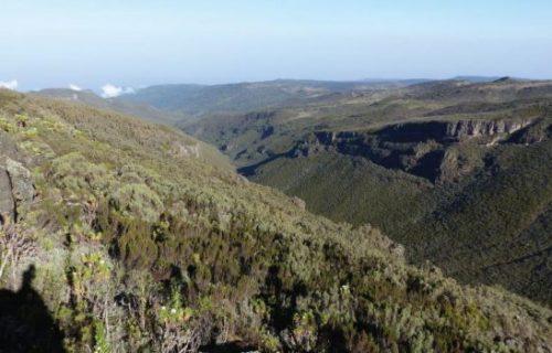 vegetation in mount elgon national park