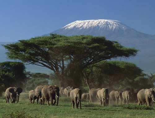 Kenya safari destinations suitable for day trips – Kenya safari News