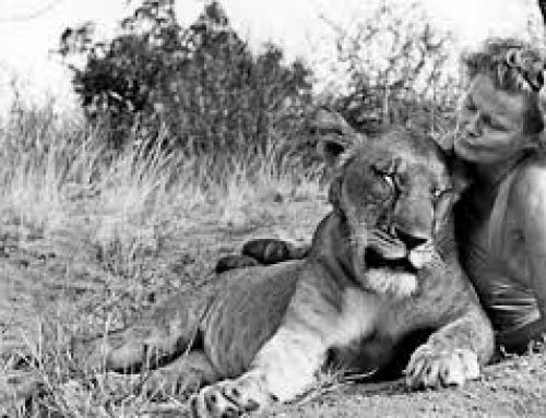 "Kenya The Home Of Elsa The Lioness In The ""Born Free Movie"""